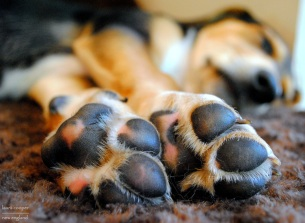 tennessee-paws